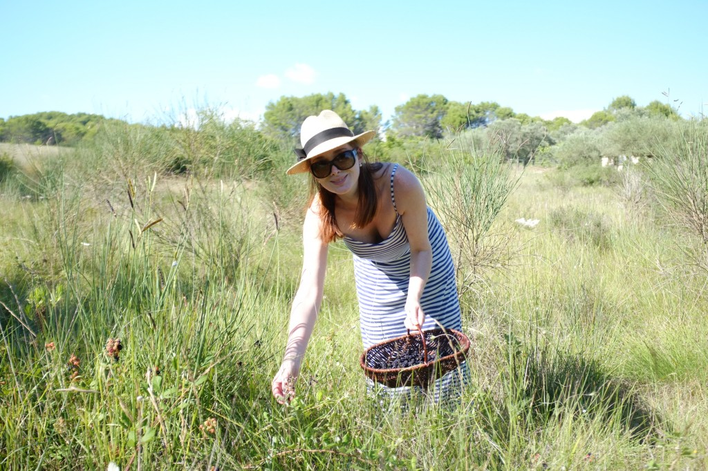 La ceuillette des mûres sauvages au fond du jardin